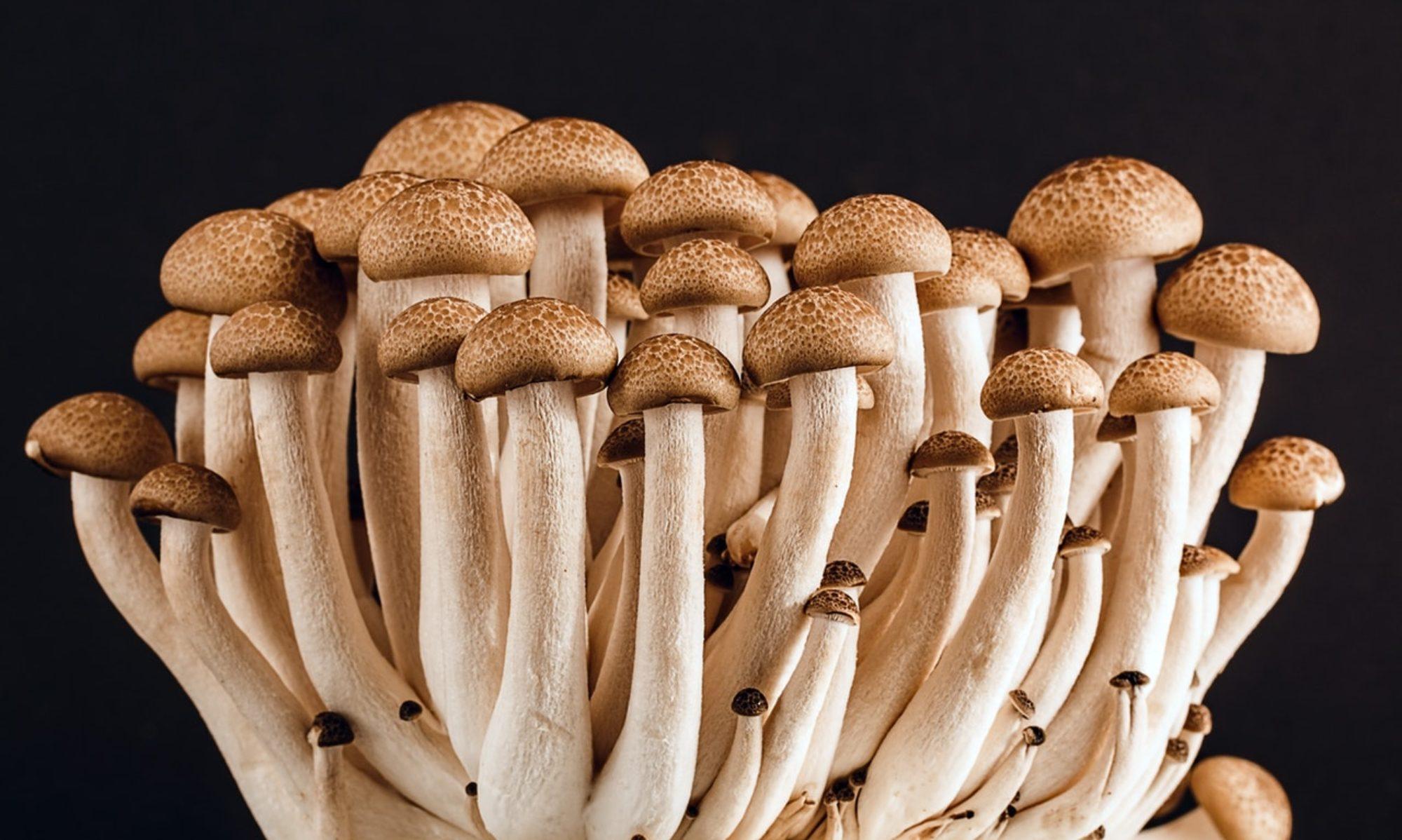 Healthy Mushrooms